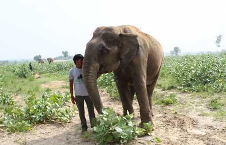 Ever Since Suzy: Continuing our Circus Elephant Campaign