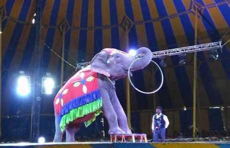 FAQ on the 'Precious Four' Elephant Rescue