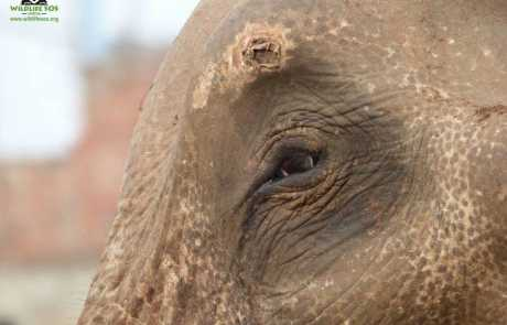 Update On Mohan's Situation