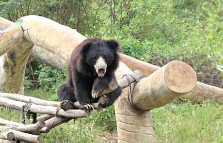 Bear Of The Month: Suri