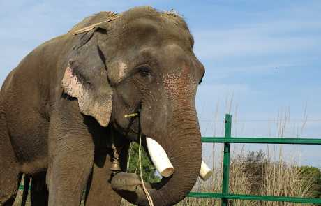 The Story of Sanjay: The Elephant With No Name