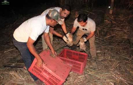 Missing Leopard cubs happily reunited with mother in Maharashtra!