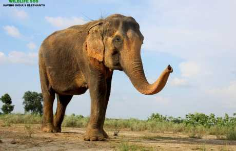 Bidding Adieu To Our Beloved Elephant, Sita