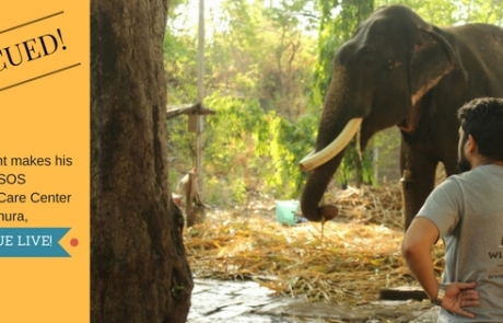 Gajraj's Rescue Journey To Our Elephant Conservation & Care Center!