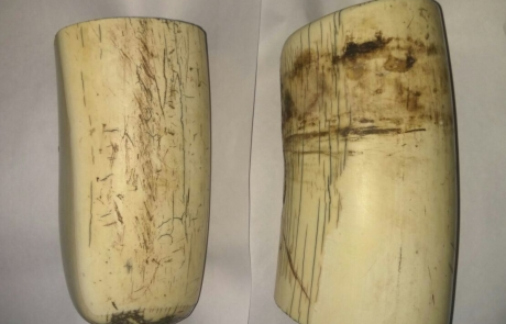 Mohan's Ivory Seized In Covert Operation