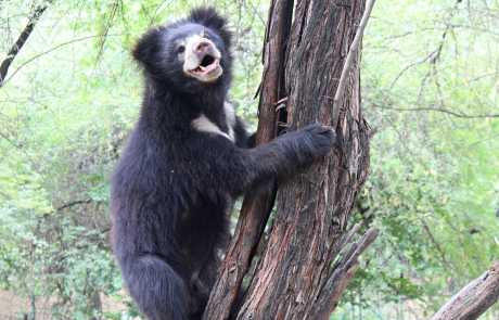 Bear Of The Month: Elvis!