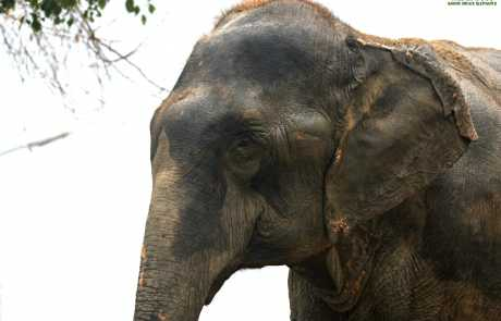 A Farewell to Our Beloved Elephant, Lakhi