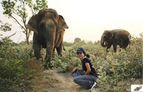 Founder of ENP, Lek Chailert Visits The Elephant Conservation & Care Center