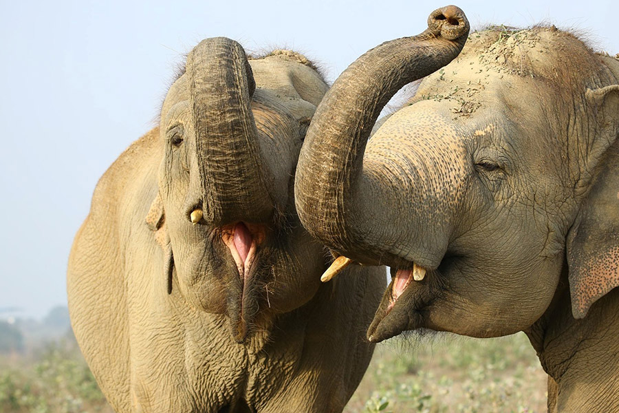 Elephant Conservation and Care Centre