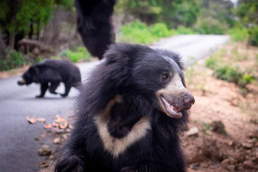 Bannerghatta Bear Rescue Centre