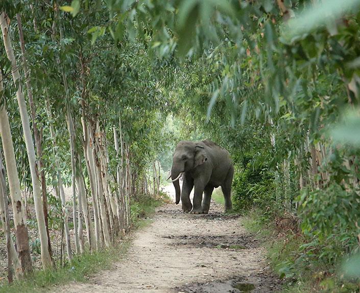 Human-Elephant Conflict Mitigation