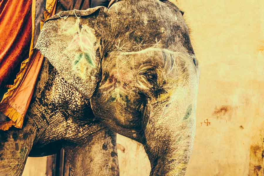 Help end the abuse. Refuse to ride elephants!