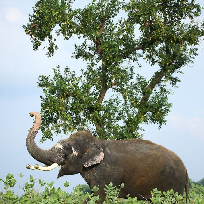 Jumbo Buffet Party On Elephant Appreciation Day