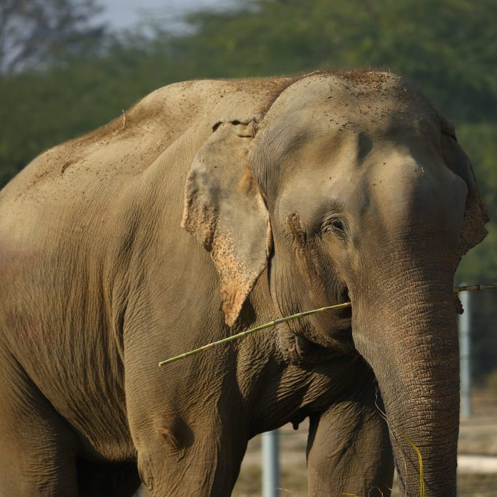 Celebrating Raju's 5th Rescue anniversary!