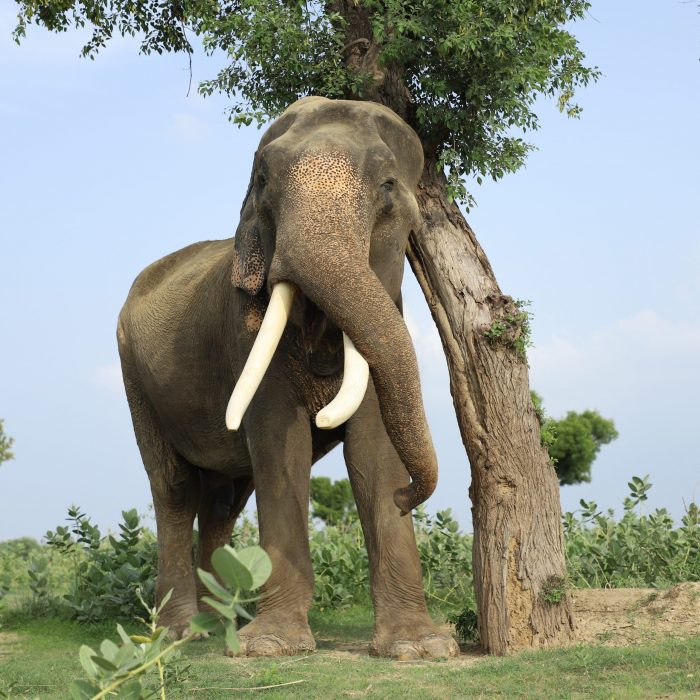 Facts About Wild Elephants