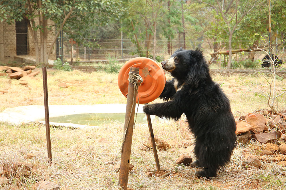 Van Vihar Bear Rescue Facility