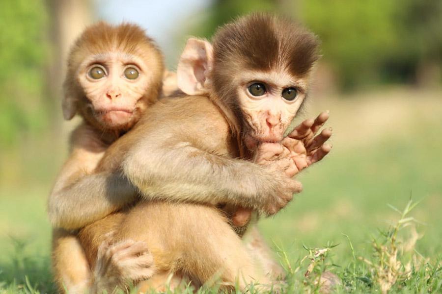 Human Primate Conflict Mitigation Centre