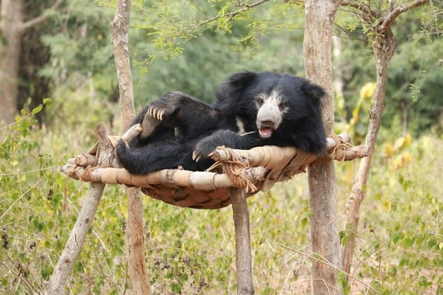 Purulia Bear Rescue Centre