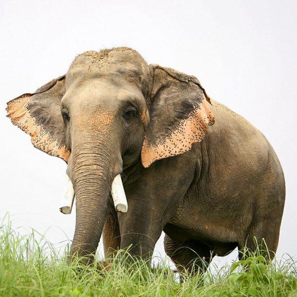 Tour India's First Elephant Hospital