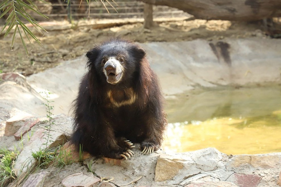Van Vihar Bear Rescue Facility