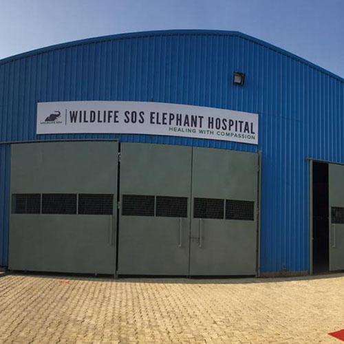 A Virtual Tour of the Wildlife SOS Elephant Hospital