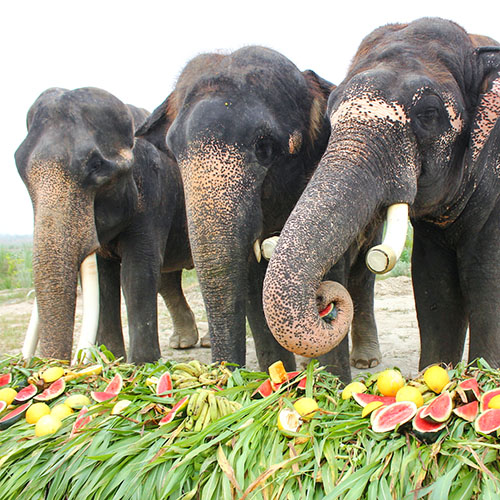 Jumbo Buffet Party On Elephant Appreciation Day
