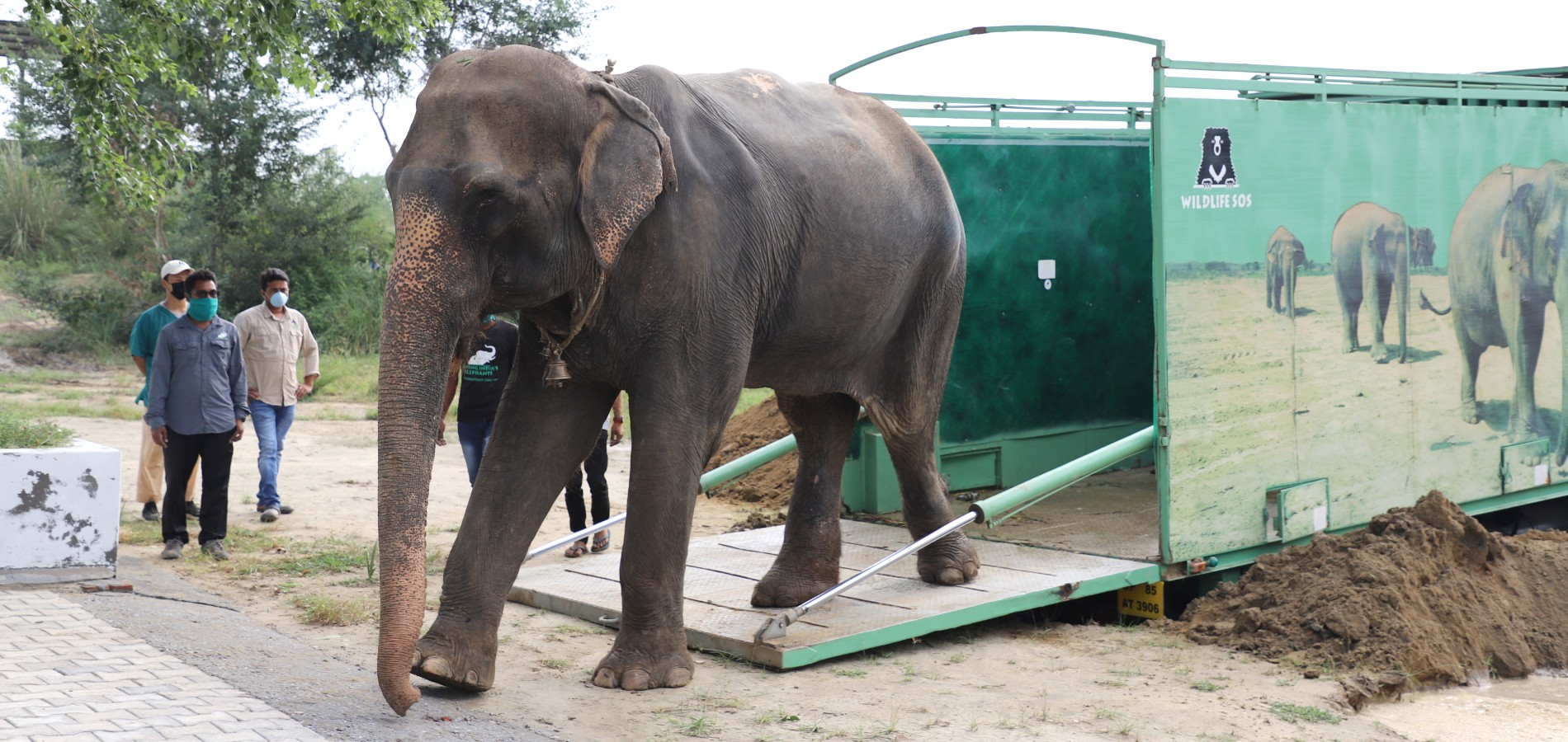 arya elephant