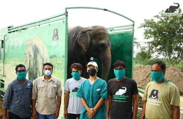 The team that brought Arya home at the Wildlife SOS Elephant Hospital!