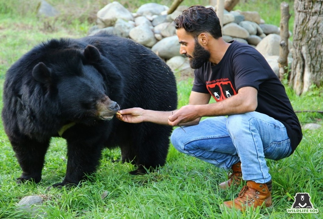 Shabir ensures that the bears are always comfortable at all times!