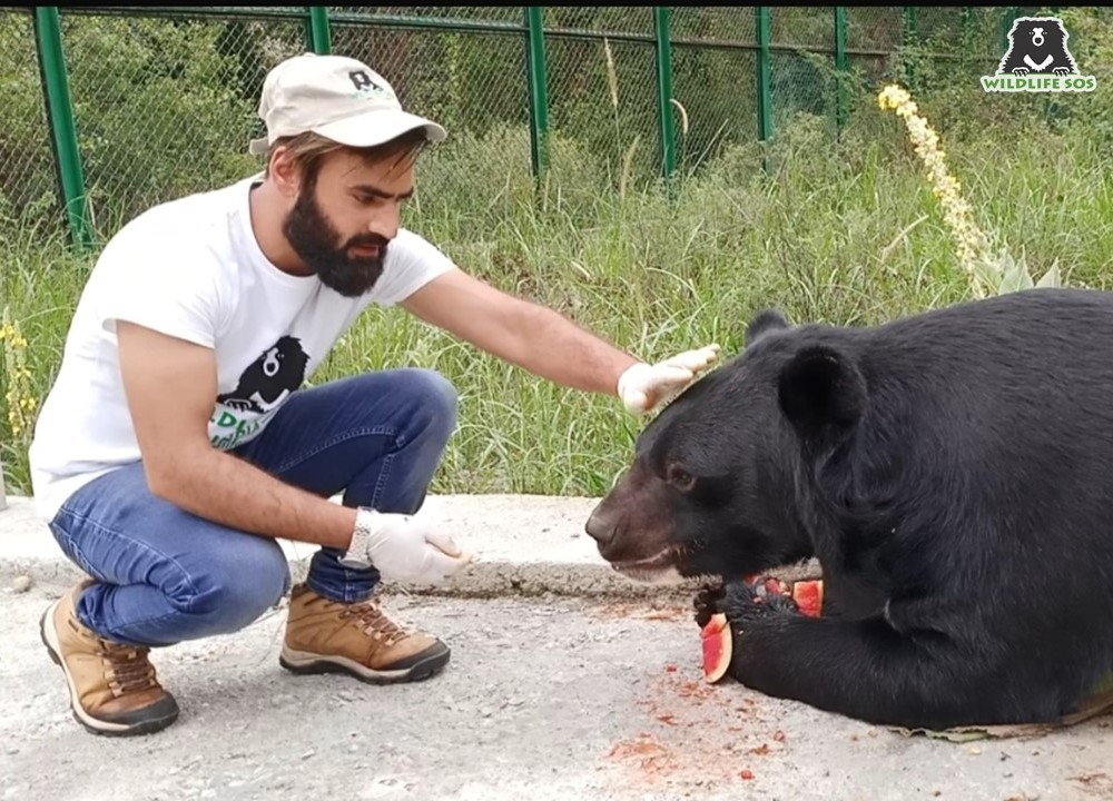 Shabir with a rescued Asiatic Black Bear at the Dachigam Bear Rescue Centre in Kashmir.
