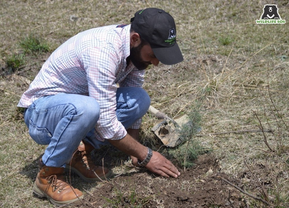 Shabir is also an enthusiastic naturalist and strongly advocates planting saplings around the National Park and nearby villages!