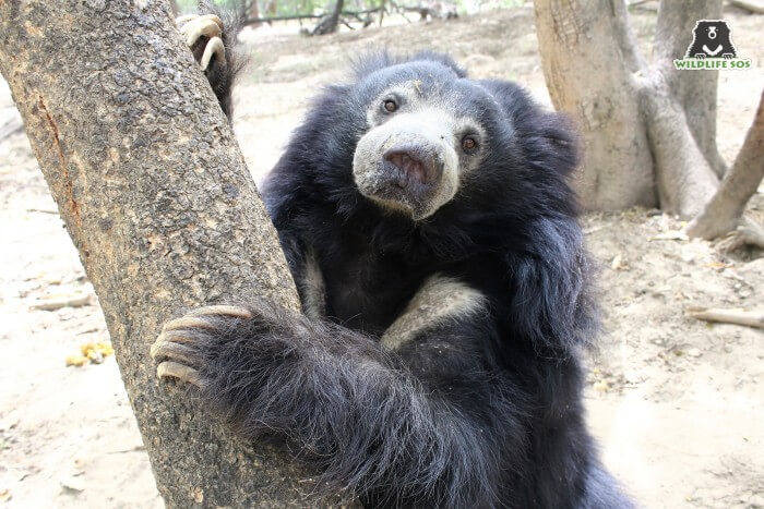 Her keepers firmly believe that she had the most beautiful and expressive eyes for a bear!