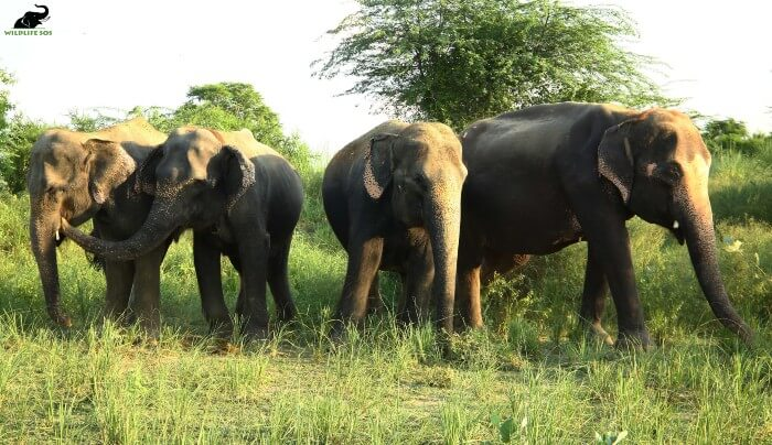 Zara, Holly, Kalpana and Karma (L to R) enjoying a sunny day after fresh rains!
