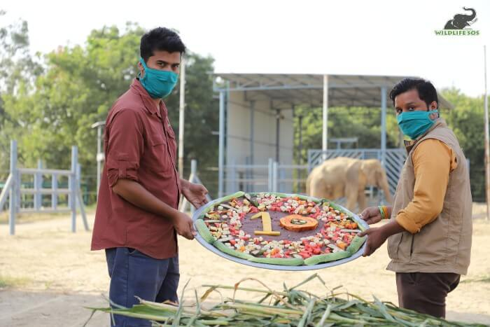For a special elephant like Bhola, even our field staff donned the hat for decorating his spread!