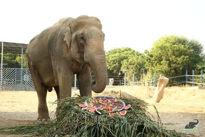 Bhola celebrating his ten years of freedom!