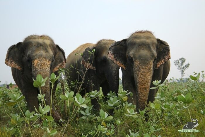 Laxmi, Bijli and Chanchal (L to R) always keep their caregivers on their toes with their antics.
