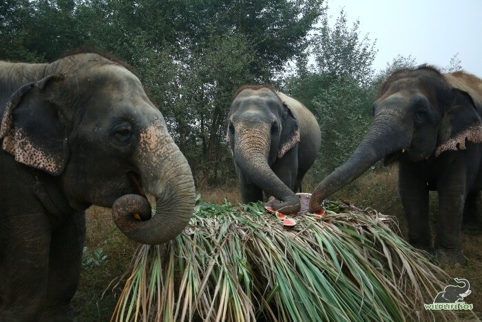 Laxmi, Bijli and Chanchal (L to R) munched down the delicious treat in a matter of minutes!