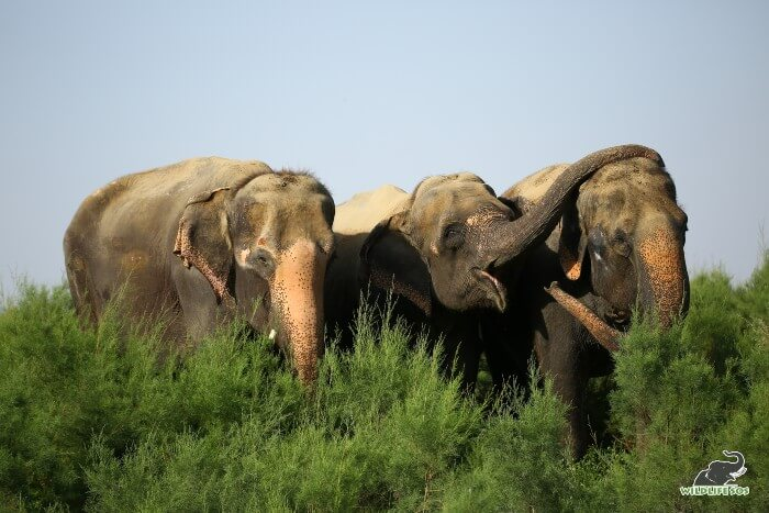 The terrific trio of the Wildlife SOS Field of Dreams - Karma, Holly and Kalpana! (L to R)