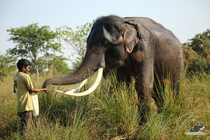 Ramu munching on his favourite peanuts steadily supplied by his caregiver!
