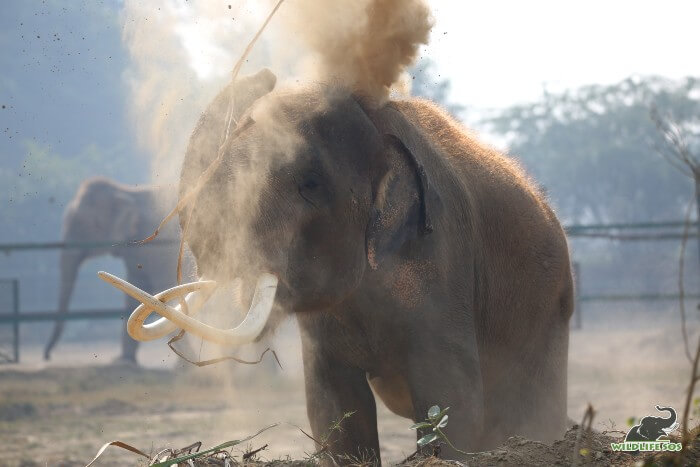 He likes to indulge in relaxing sessions of dust baths, especially with winters around the corner!