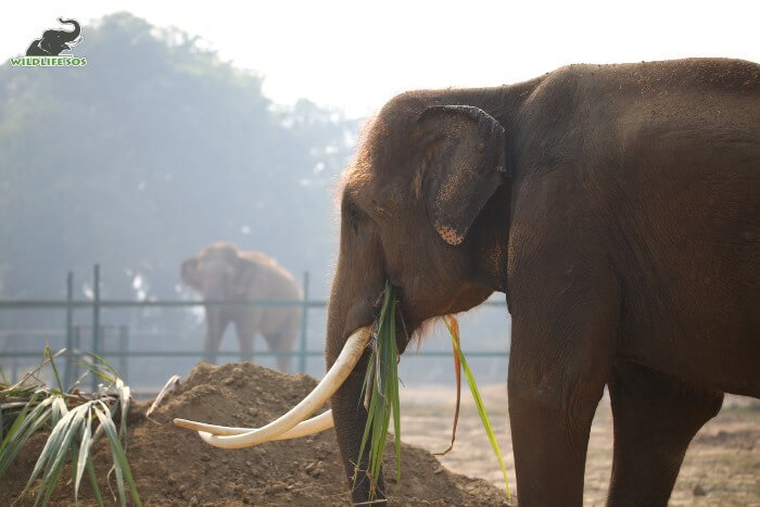 Ramu is an enthusiastic and interactive bull elephant who greets Priyanka and Mac in the neighbouring enclosures.