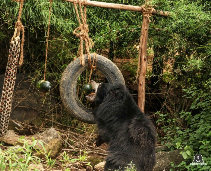 Understanding her geriatric needs, the structural enrichments in her field allow proper exercise and no strain.