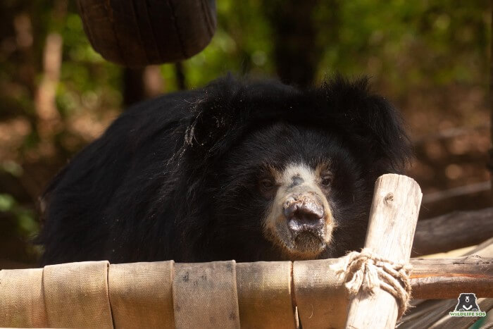 The struggle to remain awake after a delicious helping of porridge is real - as Chitra shows!