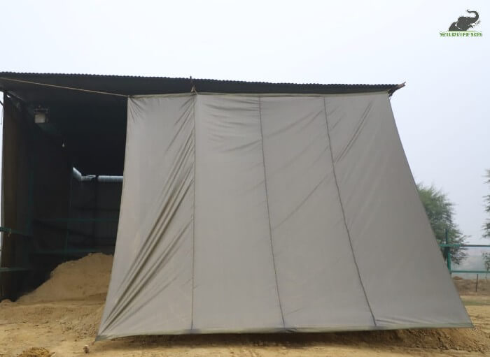 Proper covering of enclosures allow complete comfort of the elephants.