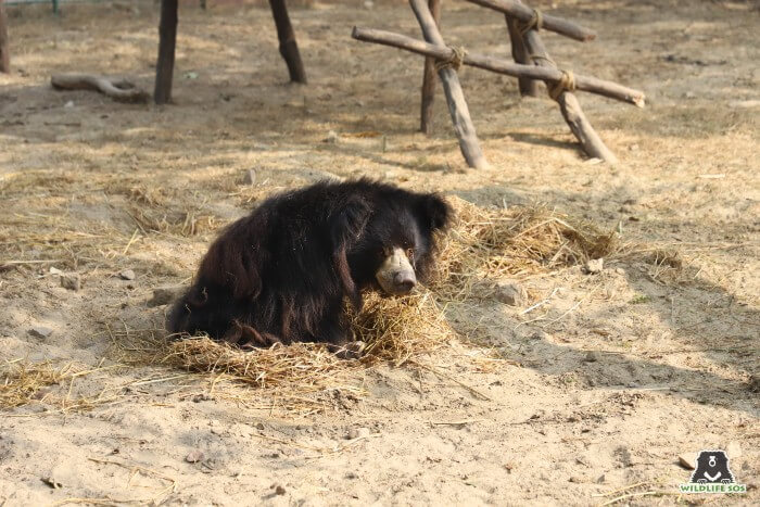 Our dear Gail loves to bask in the sun on her warm straw bed.