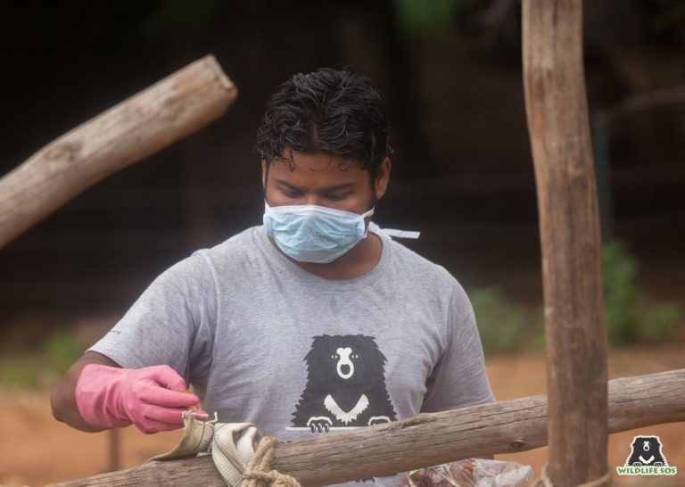 Bear keeper Allauddin creating enrichment for the bears under his care! All of our caregivers are very handy and love to create innovative enrichments for the bears.