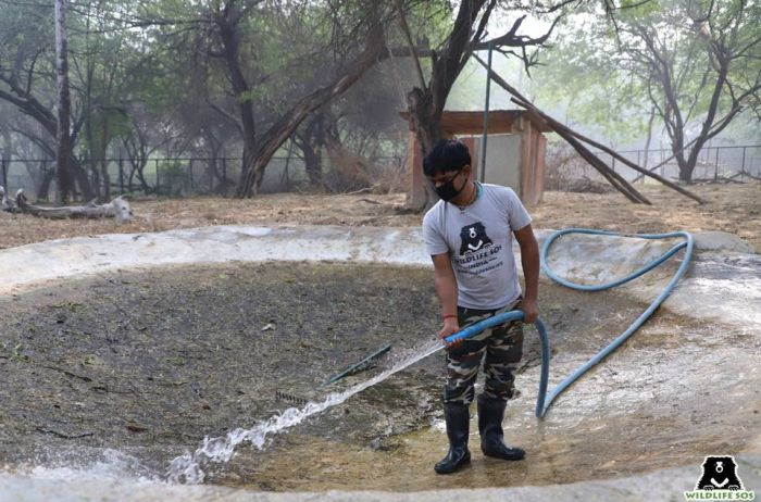 As neglected/stagnant water bodies can be a source of disease, cleaning the pools used by the bears regularly is extremely important.