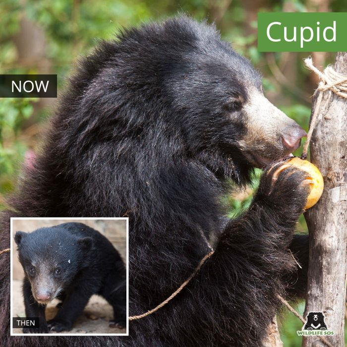 A comparison of Cupid then and now.