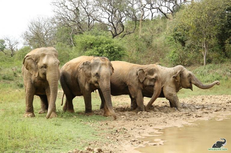 Erika with Lilly, Daisy & Ella  beside their regular mud-bog