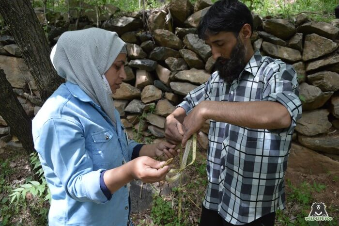 Yasin is also involved in rescuing snakes from urban wildlife conflict.